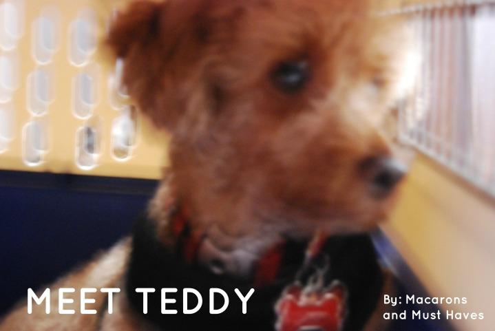 meet_teddy